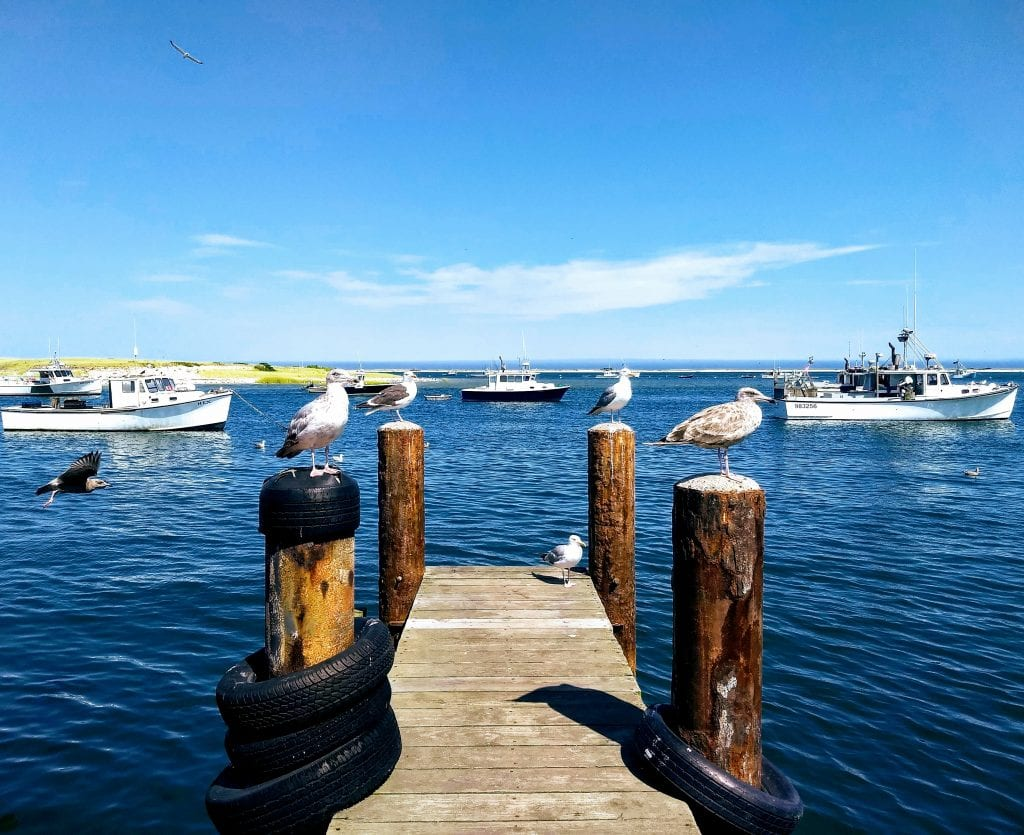 Cape Cod seagulls, fishing boats, and dock in Massachusetts.