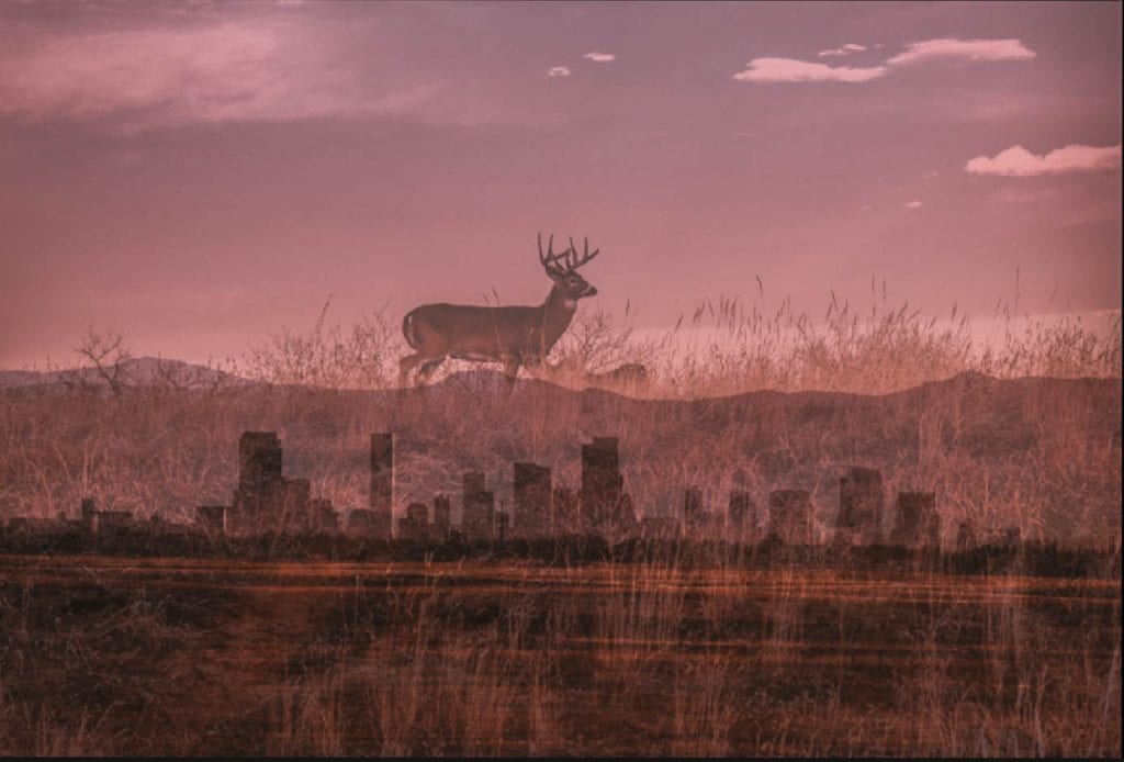 Arsenal National Wildlife Refuge in Denver