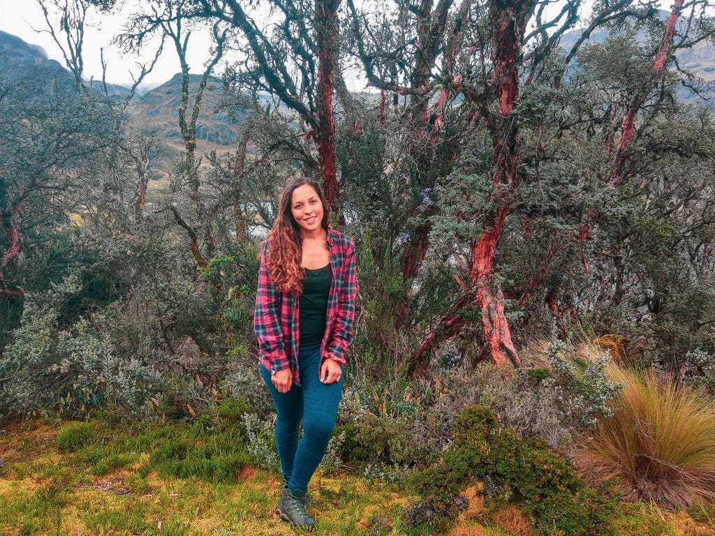 Sarah Fay travel blogger in Polylepis forest in Cajas National Park a day trip from Cuenca, Ecuador. #visitecuador