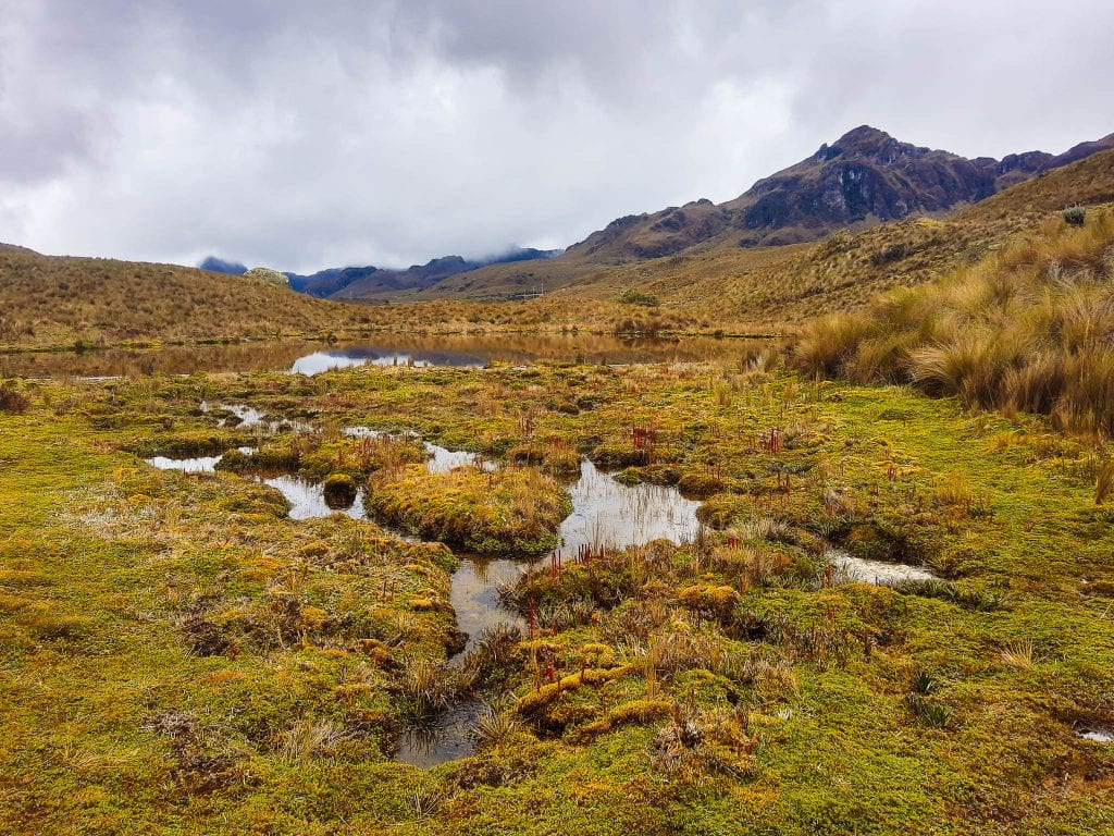 Cajas National Park landscape on overcast day. #visitecuador