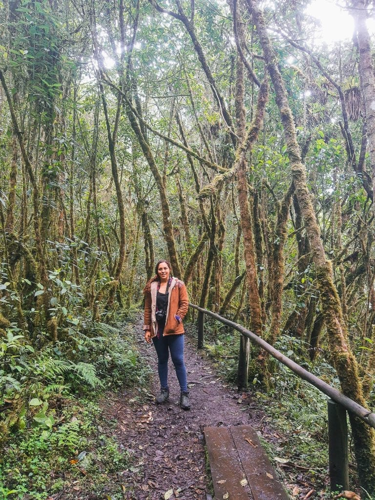 Sarah Fay in the cloud forest in Cajas National Park. #visitecuador