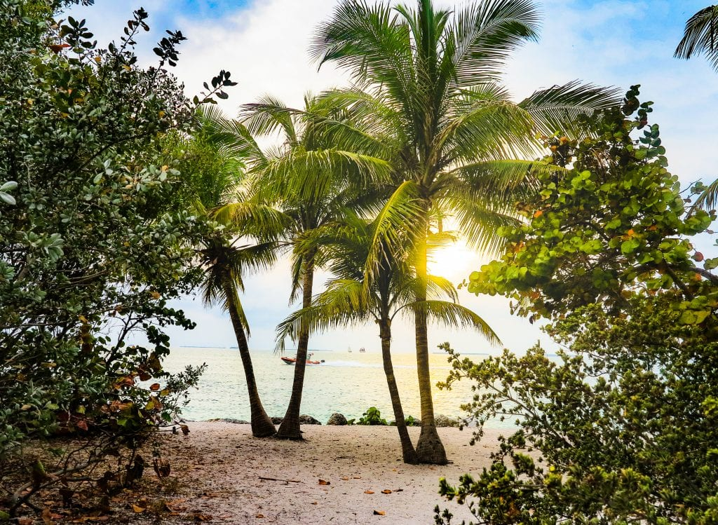 Sun shines through the palm trees on a beach in Key West, Florida