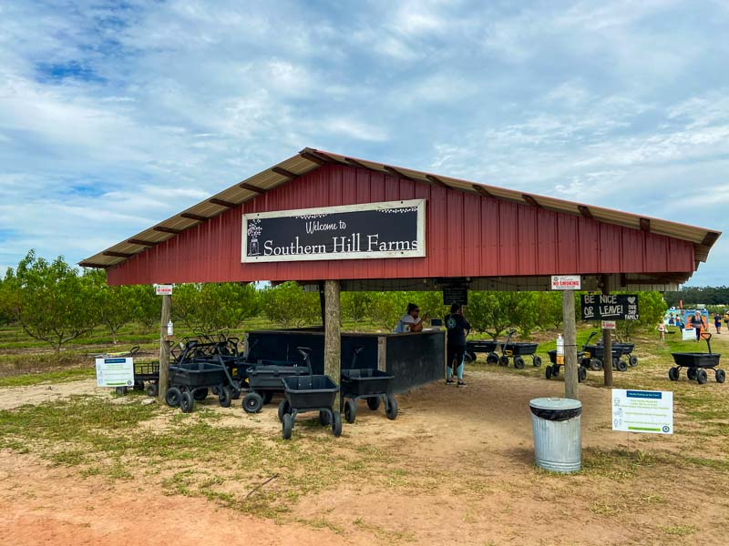 Southern Hill Farm Entrance in Clermont, Florida with carts for you to pick your pumpkins this fall.