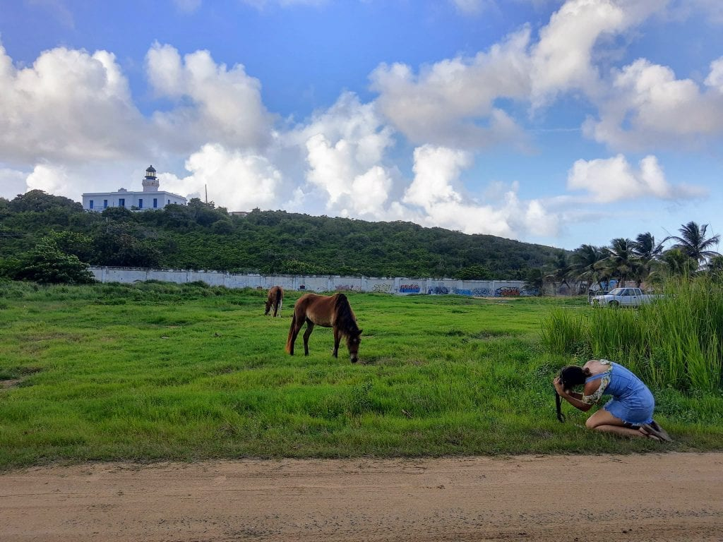 Arecibo Lighthouse in the background while sarah takes a photo of two horses in a field.