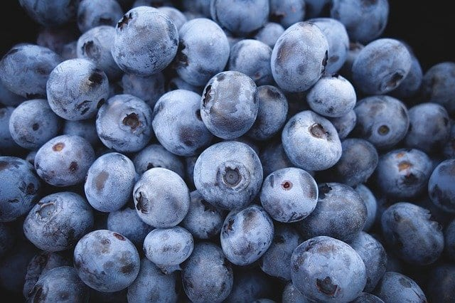 Blueberries fresh from the farm, Fall things to do in Central Florida.