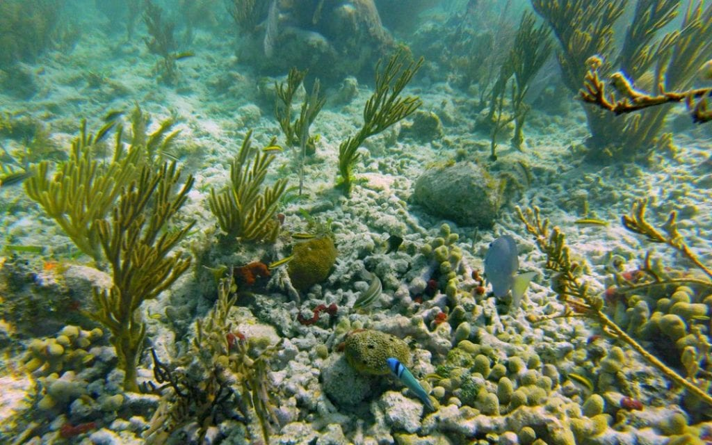 Biscayne National Park Coral reef snorkeling and beautiful coral. Best National Parks on the East Coast.